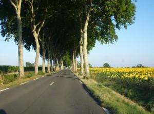 tree-road